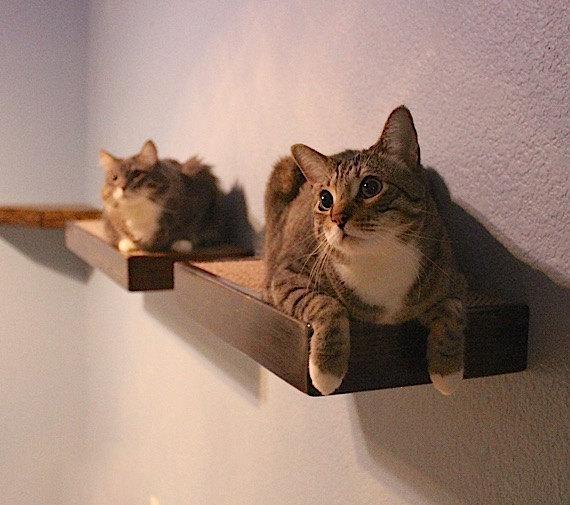 kitty climbers lisa s cats rh lisascats net Cat House cat wall shelves ikea uk